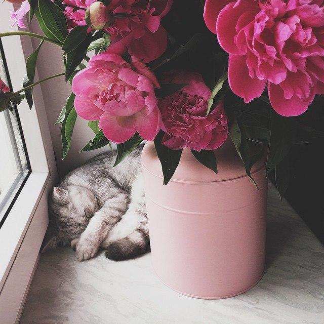 Прикольные и красивые картинки на аву кошки и котики - подборка 11