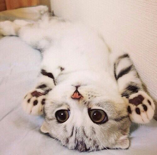 Прикольные и красивые картинки на аву кошки и котики - подборка 13