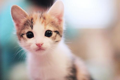 Прикольные и красивые картинки на аву кошки и котики - подборка 15