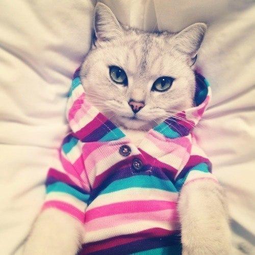 Прикольные и красивые картинки на аву кошки и котики - подборка 20