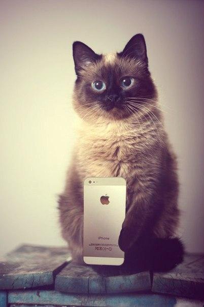 Прикольные и красивые картинки на аву кошки и котики - подборка 8