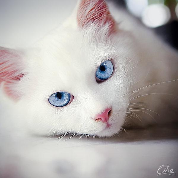 Прикольные и красивые картинки на аву кошки и котики - подборка 9