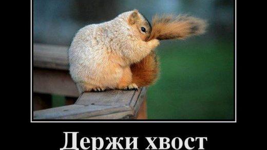 Смешные и прикольные демотиваторы недели за июнь - сборка №32 11