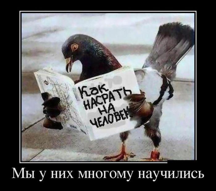 Смешные и прикольные демотиваторы недели за июнь - сборка №32 9