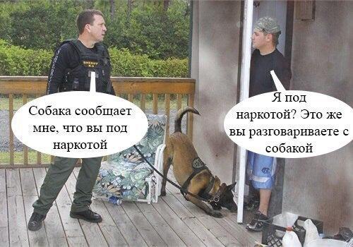 Смешные картинки про животных с надписями - веселая подборка №64 5