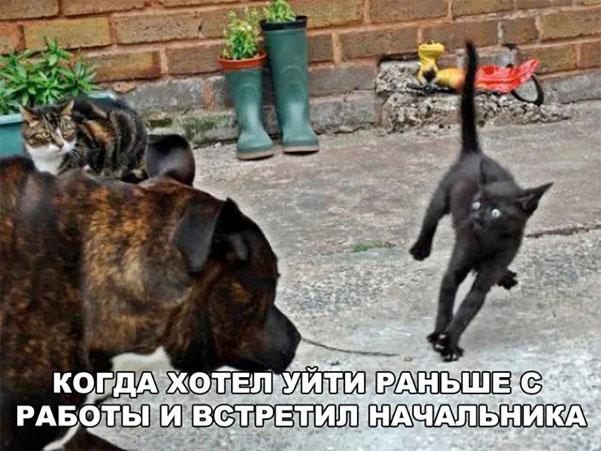 Смешные картинки про животных с надписями - веселая подборка №64 9