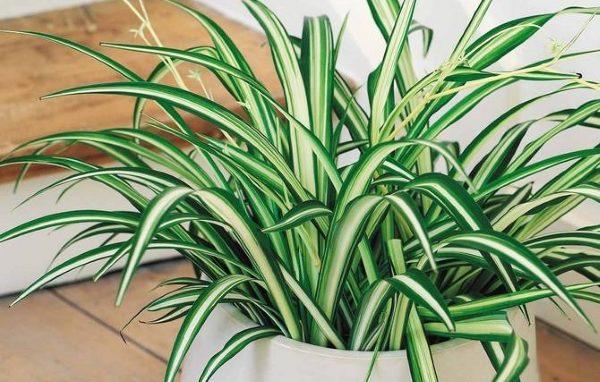 7 лучших комнатных растений для очищения воздуха в помещении 1