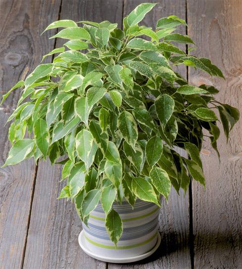 7 лучших комнатных растений для очищения воздуха в помещении 3