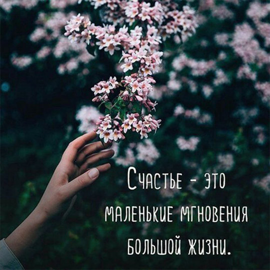 Интересные и красивые цитаты про цветы, растения - подборка 2