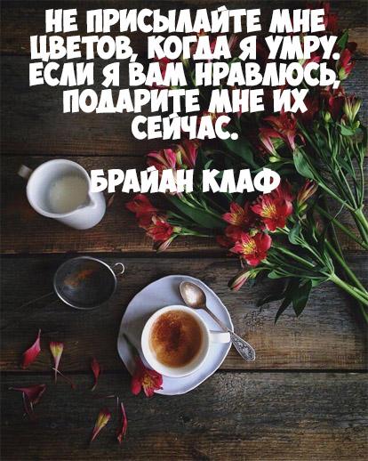 Интересные и красивые цитаты про цветы, растения - подборка 3