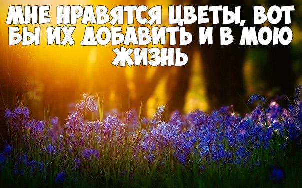 Интересные и красивые цитаты про цветы, растения - подборка 6