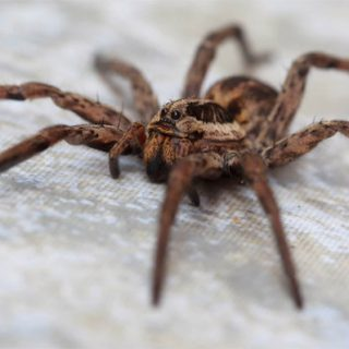 Исследование показывает, что у пауков есть любимый цвет - новости 1