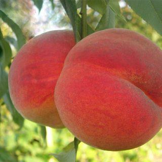 Как вырастить персик из косточки в домашних условиях - техника, правила 2