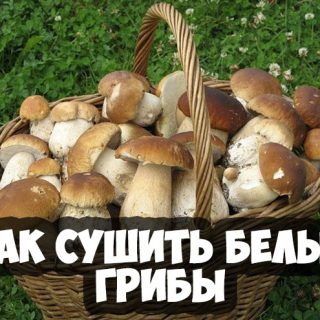Как сушить белые грибы в домашних условиях - основные способы 1