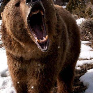 Картинки на телефон медведи, аватарки с медведями - подборка 10