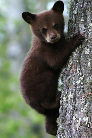 Картинки на телефон медведи, аватарки с медведями - подборка 2
