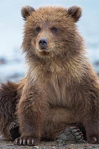 Картинки на телефон медведи, аватарки с медведями - подборка 6