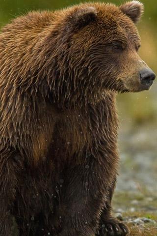 Картинки на телефон медведи, аватарки с медведями - подборка 7