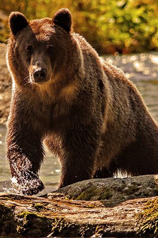 Картинки на телефон медведи, аватарки с медведями - подборка 8