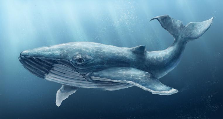 Киты - фотографии китов. Удивительные и красивые фото китов 10