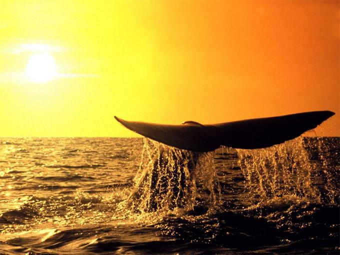 Киты - фотографии китов. Удивительные и красивые фото китов 3