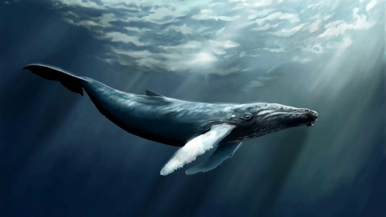 Киты - фотографии китов. Удивительные и красивые фото китов 4