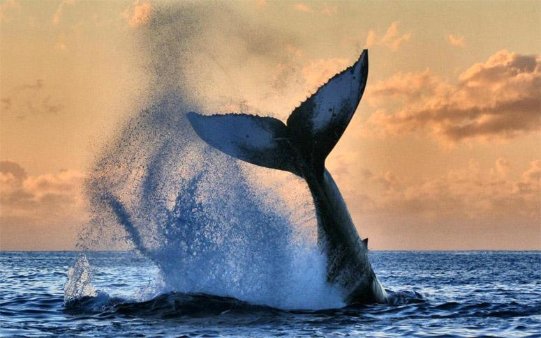 Киты - фотографии китов. Удивительные и красивые фото китов 7