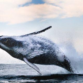 Киты - фотографии китов. Удивительные и красивые фото китов 8