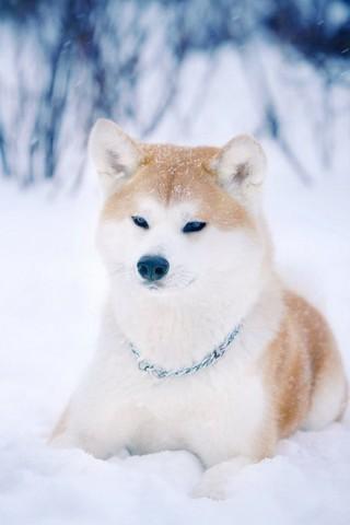 Классные и прикольные картинки, фото собак, щенков на телефон - подборка 11