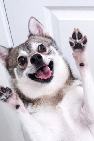 Классные и прикольные картинки, фото собак, щенков на телефон - подборка 12
