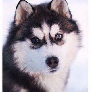 Классные и прикольные картинки, фото собак, щенков на телефон - подборка 15