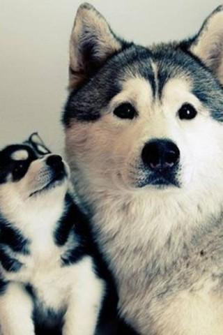 Классные и прикольные картинки, фото собак, щенков на телефон - подборка 18