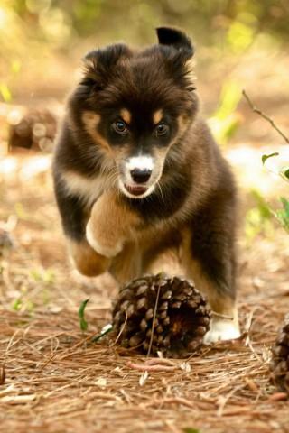 Классные и прикольные картинки, фото собак, щенков на телефон - подборка 3