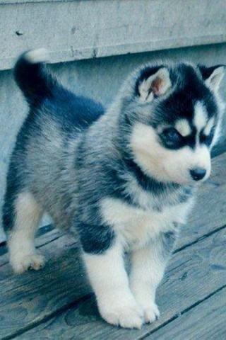 Классные и прикольные картинки, фото собак, щенков на телефон - подборка 6