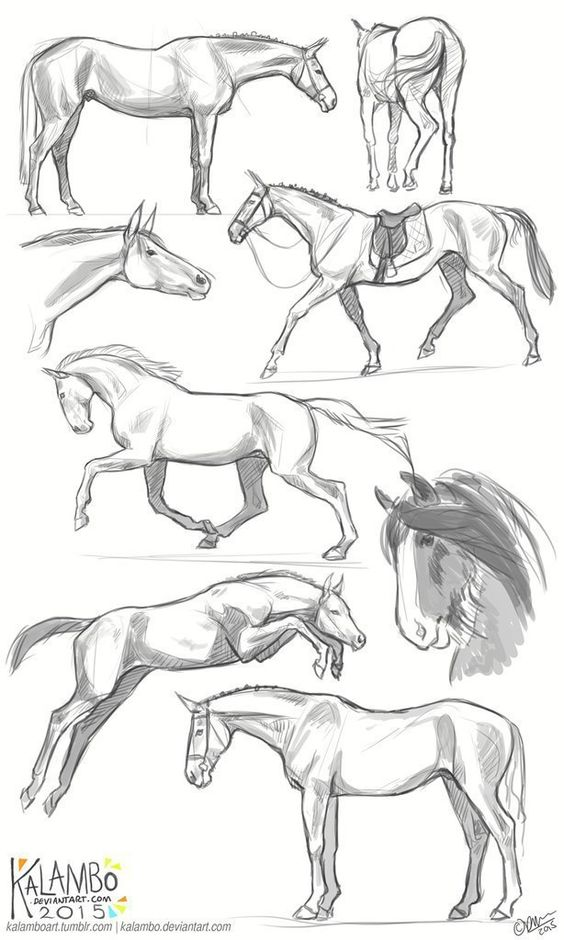 Красивые картинки для срисовки карандашом лошади или пони 1