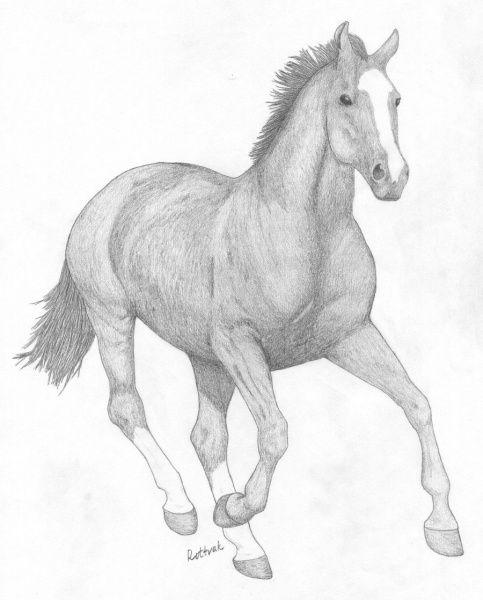Красивые картинки для срисовки карандашом лошади или пони 16
