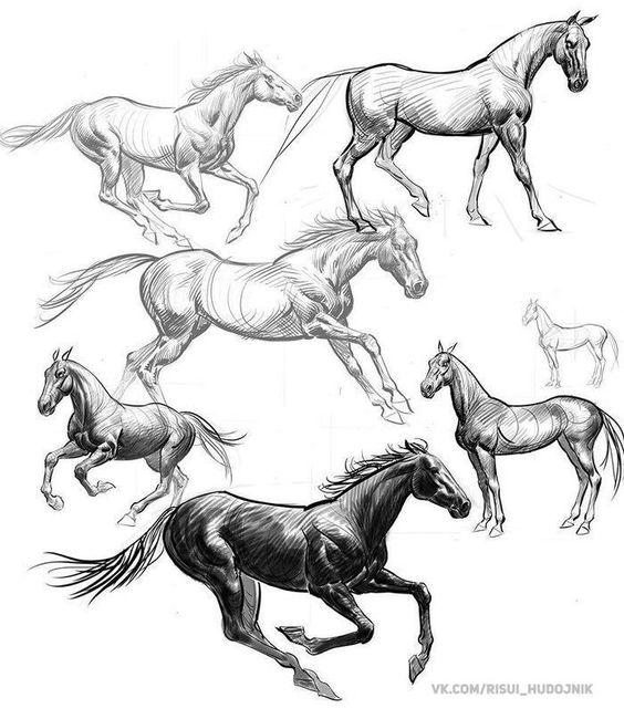 Красивые картинки для срисовки карандашом лошади или пони 21