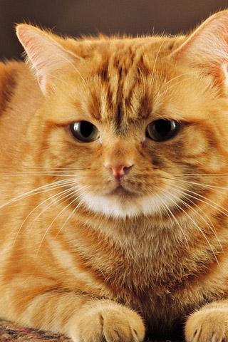 Красивые картинки котиков и кошек на заставку телефона - подборка 1