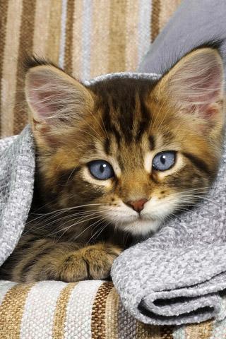 Красивые картинки котиков и кошек на заставку телефона - подборка 10