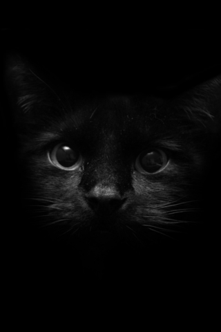 Красивые картинки котиков и кошек на заставку телефона - подборка 11