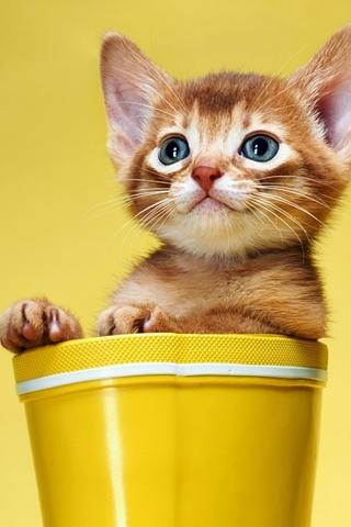 Красивые картинки котиков и кошек на заставку телефона - подборка 13
