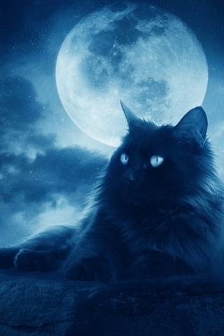 Красивые картинки котиков и кошек на заставку телефона - подборка 16