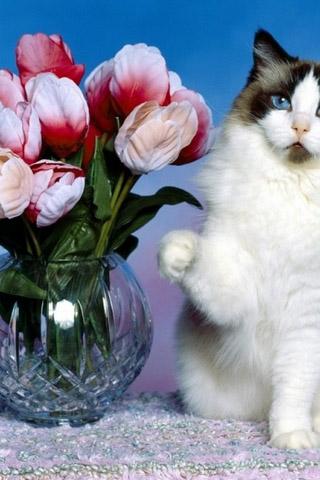 Красивые картинки котиков и кошек на заставку телефона - подборка 17