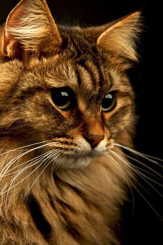 Красивые картинки котиков и кошек на заставку телефона - подборка 19