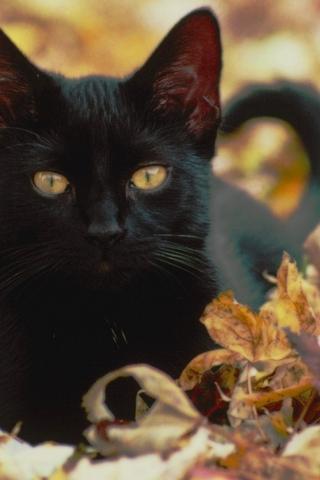 Красивые картинки котиков и кошек на заставку телефона - подборка 20