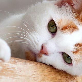Красивые картинки котиков и кошек на заставку телефона - подборка 21