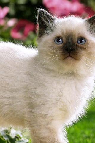 Красивые картинки котиков и кошек на заставку телефона - подборка 23