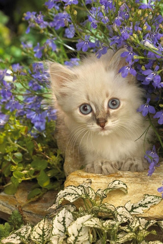 Красивые картинки котиков и кошек на заставку телефона - подборка 24