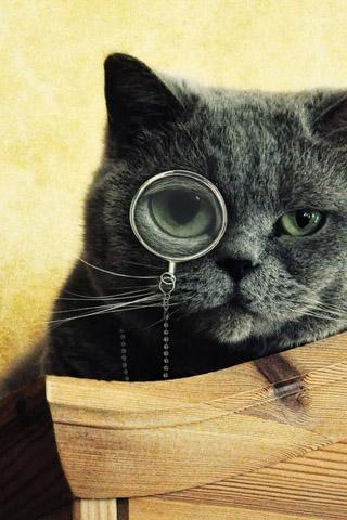 Красивые картинки котиков и кошек на заставку телефона - подборка 26