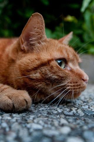 Красивые картинки котиков и кошек на заставку телефона - подборка 4